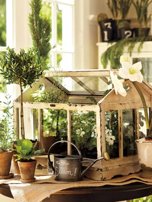 A Pottery Bar terrarium made of distressed painted pine and glass replicates early greenhouses, popular during the Victorian era.