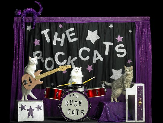 The Rock Cats lay down some mewsical licks as part