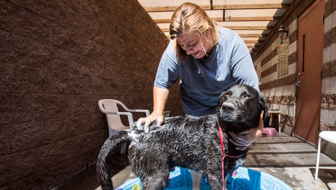A domestic abuse victim bathes her dog at Noah's Animal House shelter in Las Vegas.