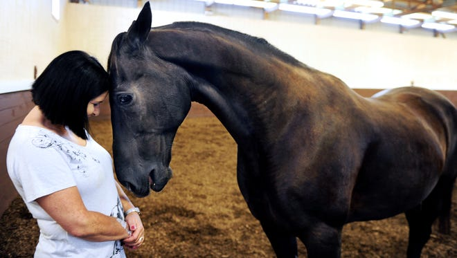 Dutch, a Tennessee Walking Horse who showed up at a slaughter auction in Pennsylvania with evidence of soring, greets Valerie Pringle, an equine protection specialist with the Humane Society of the United States.