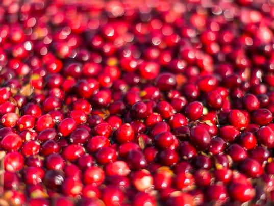 Cranberry harvest 2012