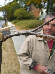 Burlington City Arborist Warren Spinner inspects a