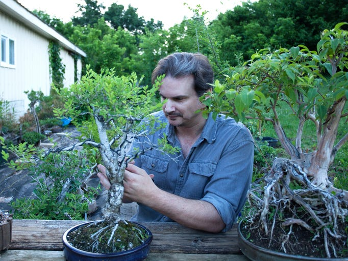 Jarod Kearney prunes a bonsai tree in his backyard