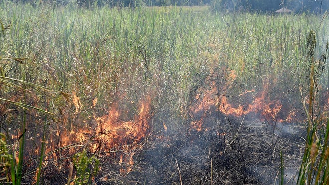 Fire consumes prairie grass as Columbia Public School teachers participate in a controlled burn of 1-1/2 acres of the Two Mile Prairie Elementary School prairie to keep it maintained.