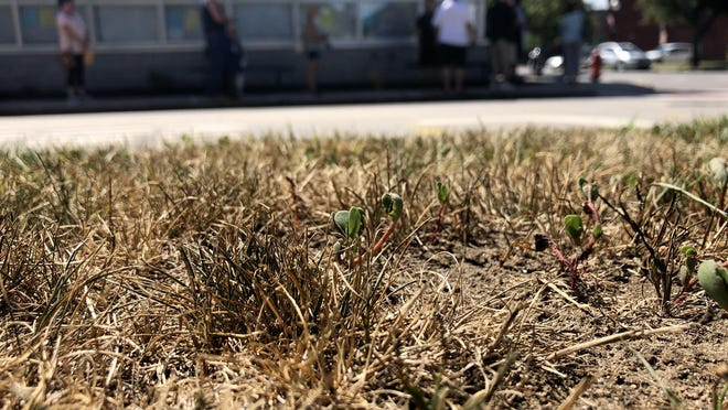 A low amount of rain this summer has many lawns, such as the one at Rochester City Hall, showing brown and dry patches due to lack of moisture.
