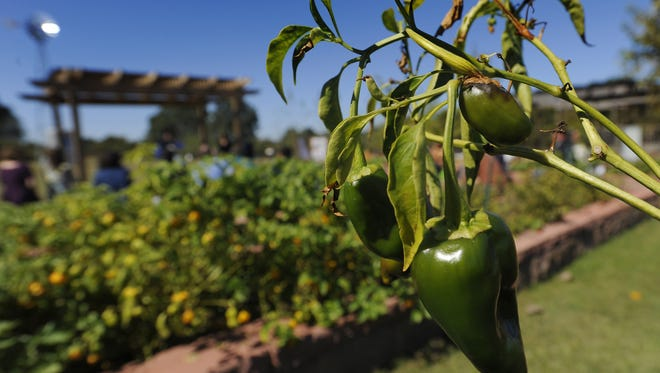 EAT South operates an urban farm near the riverfront in downtown Montgomery.