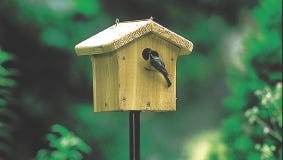 Double check your nest boxes to be sure they are clean and ready for new families.