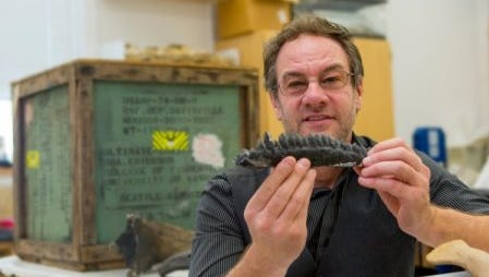 Gregory Erickson is a professor of biological science at Florida State University. In this photo, he is holding a mold of teeth from triceratops.