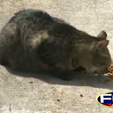 A local woman could be forced to move unless she stops feeding feral cats in her neighborhood.