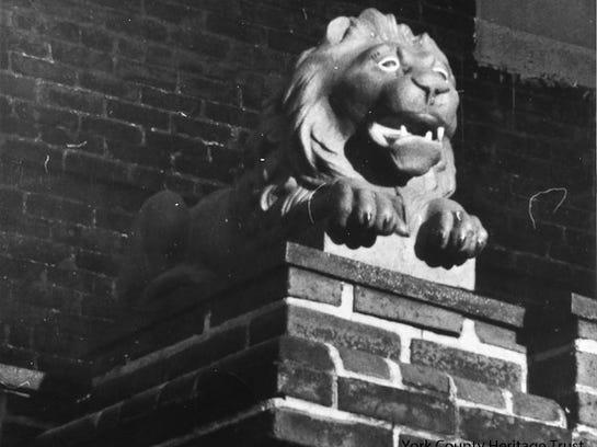 1972 lion close-up