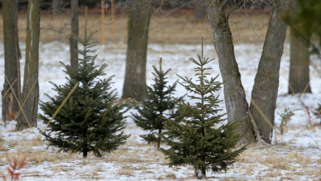 Property around the home of Peter Ogden near Pewaukee Lake in the Town of Delafield includes small evergreen trees. A Court of Appeals ruled Wednesday in favor of Ogden qualifying for an agricultural classification on 12 acres of land behind his home.