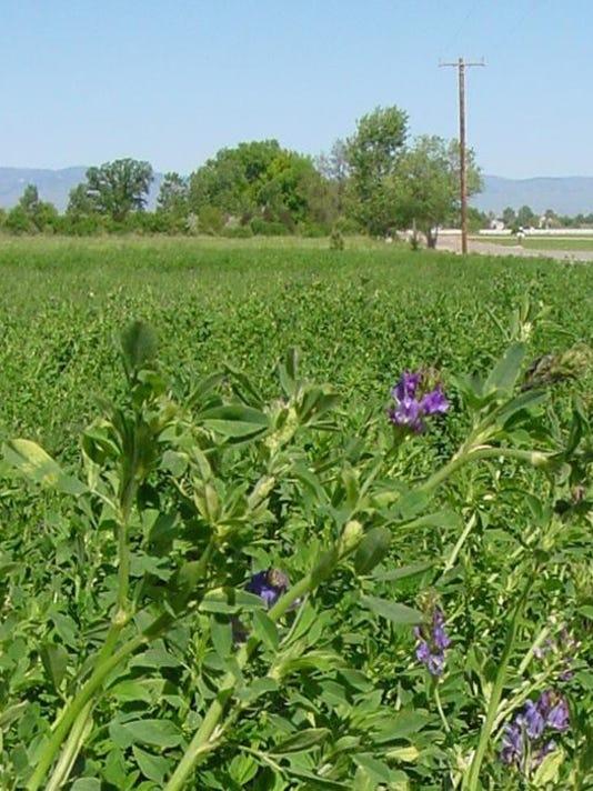 Mason-Valley-Farming 2