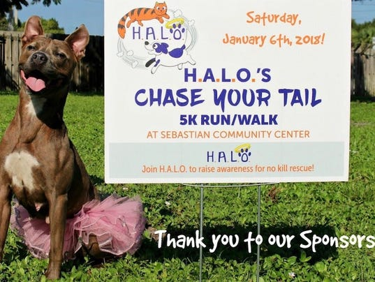 636479774484842077-Chase-Your-Tail-5K.jpg