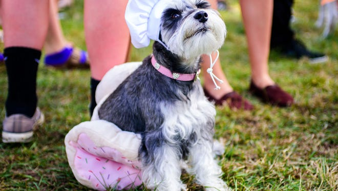 Students attend the free Puppy Spooktacular event hosted by Coping through College, including therapy dogs, pizza, and tabling student organizations, on Thurs., Oct. 20 on Landis Green at Florida State University, in Tallahassee, FL.