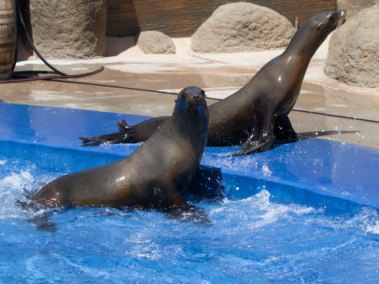 Sea lions are new to the park. The training shows debuted