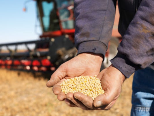 Soybeans in Farmers Hands