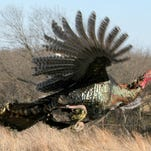 One of the problems with turkey hunting is you can't do it often enough to get good at it.