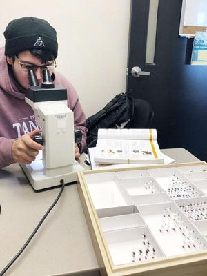 Black Hawk College East Campus student Nicolas Sierra is helping identify bees collected at Illiniwek Forest Preserve near Hampton by Assistant Biology Professor Isaac Stewart's research class. The date will be used to inventory the bee population and determine their rate of decline. Black Hawk College East Foundation funded a grant for high-tech microscopes with built-in digital cameras for photographing specimens to send to experts for identification assistance.