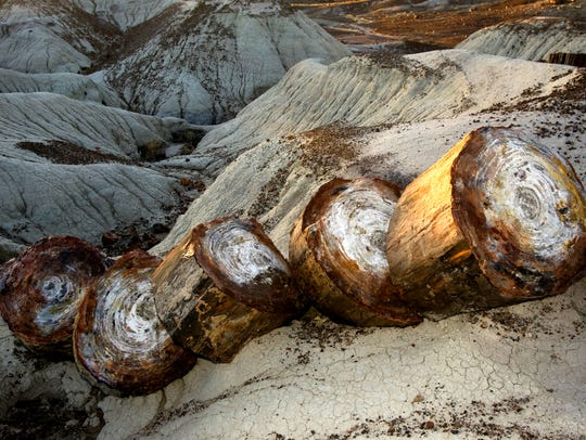 Petrified wood is seen in the Crystal Forest at the