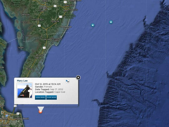A screenshot of OCEARCH's shark tracker shows great white shark Mary Lee is near Delmarva.