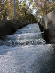 An artificial fish ladder helps trick brown trout