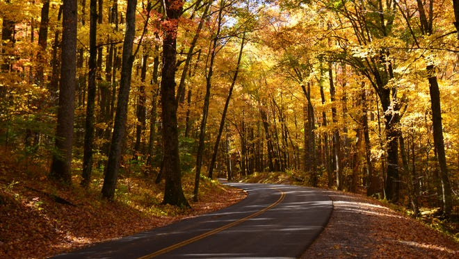 An oak forest lines the scenic Rich Mountain Road.