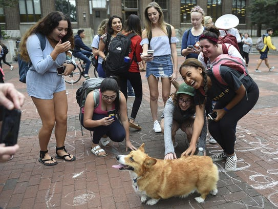 "Reggie the ""Campus Corgi,"" is surrounded by students"