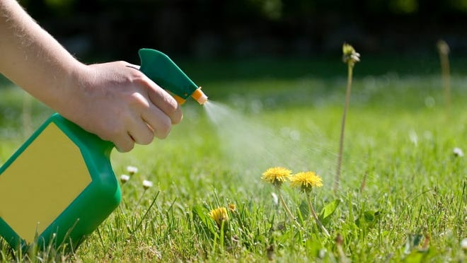 Spray bottles of weed killer should not be your first line of defense. Try to prevent them before they have a chance to grow.