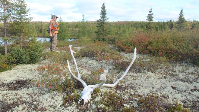 Joe Weiss of Spooner, Wis., glasses for caribou while hunting in September in northern Quebec.