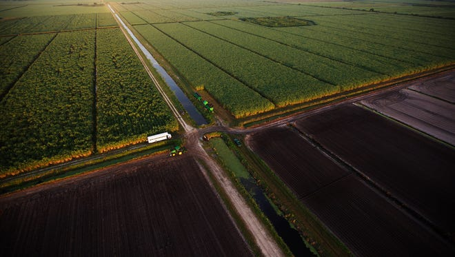 Sugarcane fields are worked on the south side of Lake Okeechobee in September of this year.