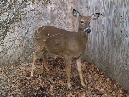 Saving Deer (2)