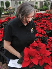 Smith's Gardentown Farm, owner, Katherine Smith looks over Poinsettias that are ready to be bought at their farms located on Seymour Highway.