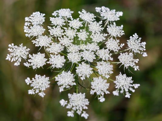 636378282322272196-080817-SHE-Wild-Flower-Garden-gck-002.JPG