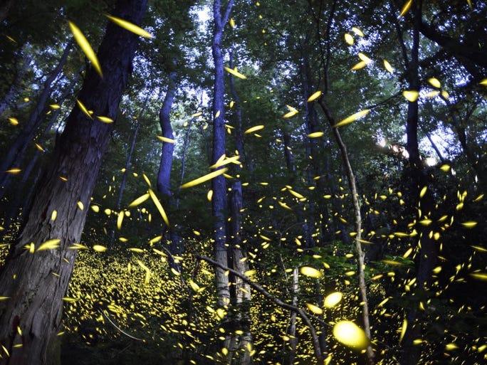 Firefly dates