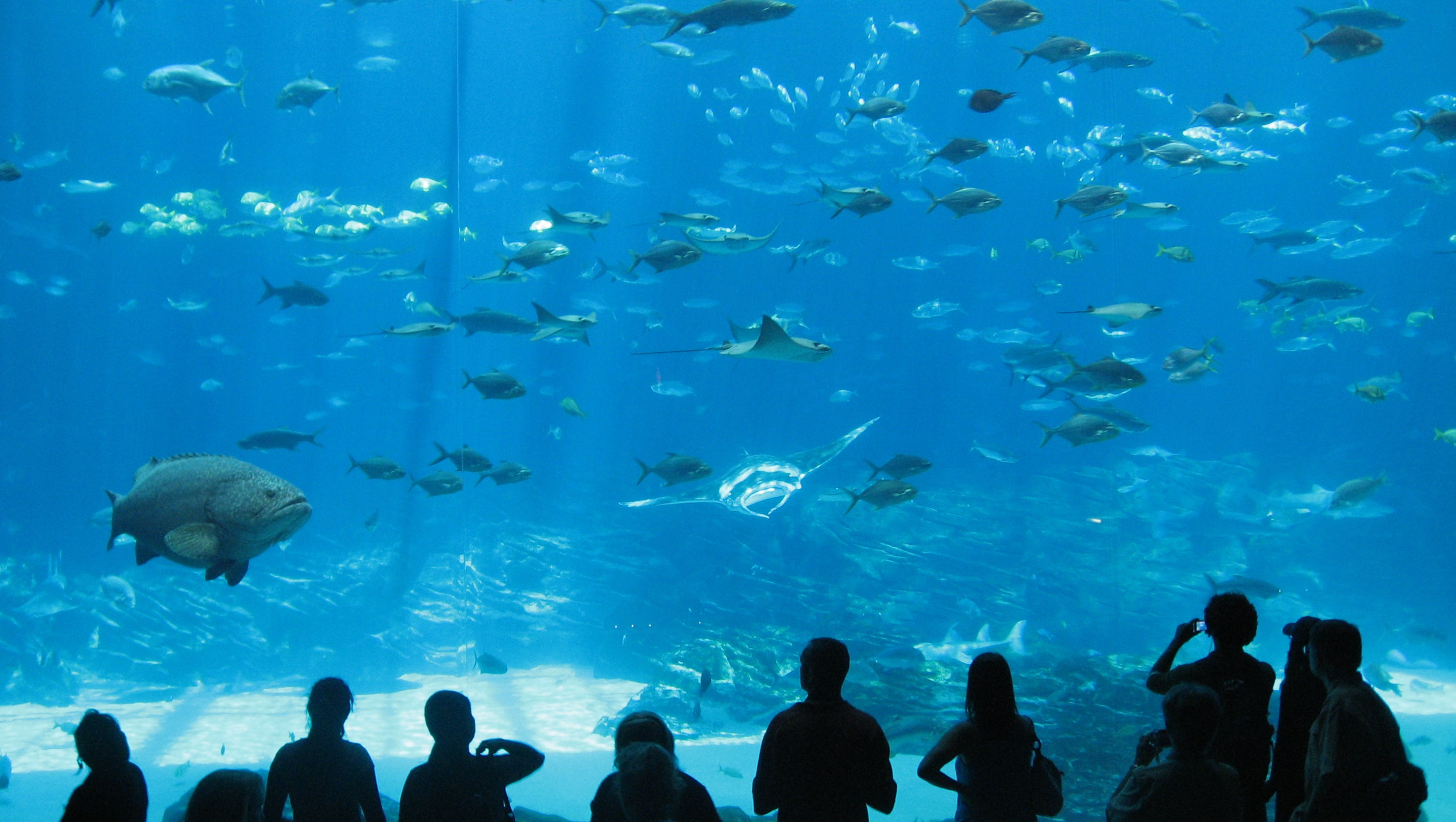 Tripadvisor names the world 39 s top aquariums for World s longest video