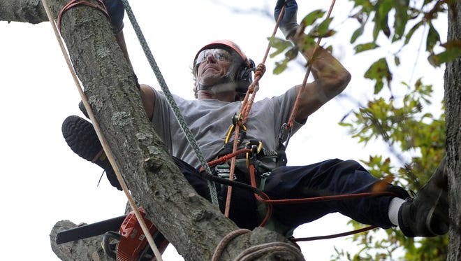 When considering a tree care company, remember that trees are alive. Experts require a great deal of technical knowledge to provide appropriate care. Inappropriate care can injure or kill your trees.
