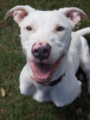 """The Doggo of the Week is """"Sweetness,"""" a 9-month-old"""