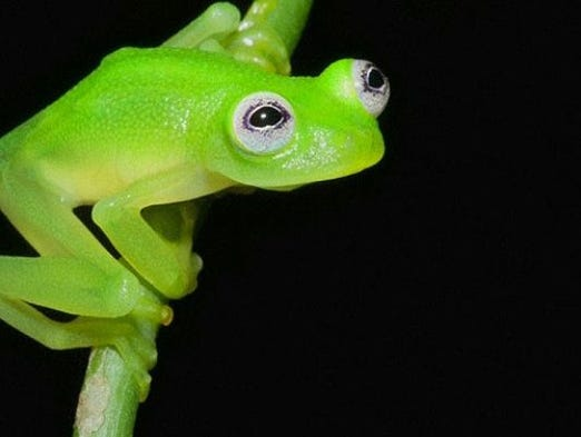 How chameleons really change their color for Frog agency