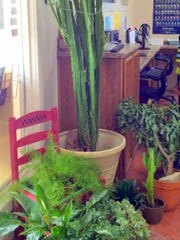 Need short or tall plants? The Capitan Library will