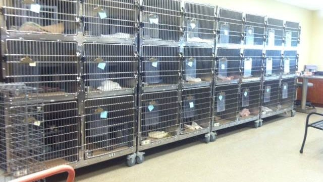 Lee County Domestic Animal Services recovered 99 cats from a home in Lee County.