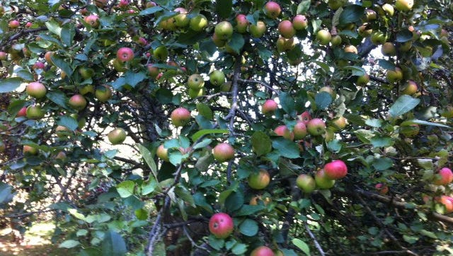 JMT US found a way to store Michigan apples for longer periods of time without losing their freshness.