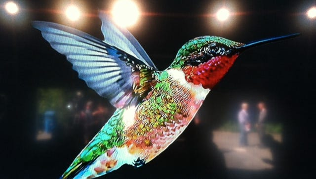 Google's 'Hummingbird.'