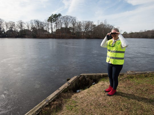 Judy Rorrer of Long Neck who is a volunteer with the Marine Education, Research & Rehabilitation Institute in Lewes, scans the waters at Coursey Pond in Felton in search of a seal that has been spotted there.