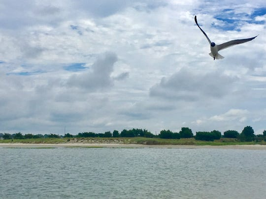 A gull takes flight over one of the tiny barrier islands