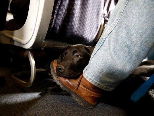 'Let Our Airlines Compete: Maybe More Dogs Will Reach Their Destinations'