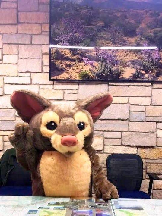 Ringtail mascot