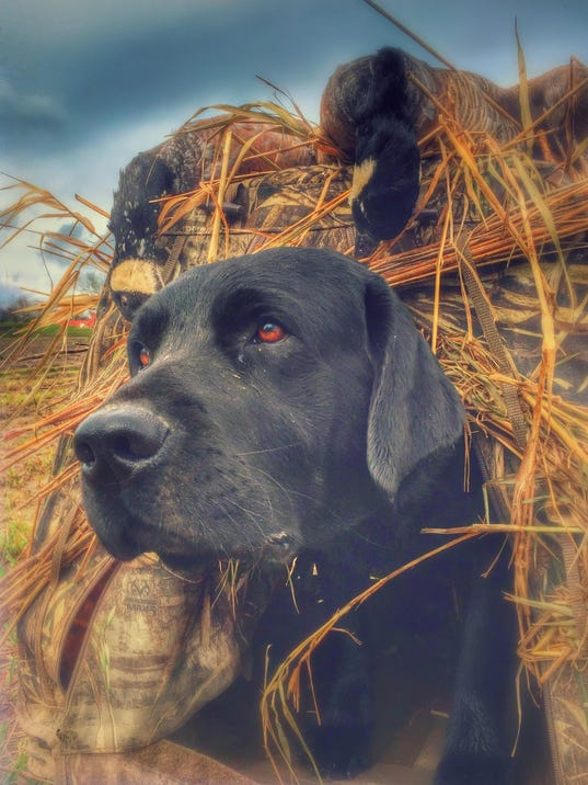 cover-waterfowl-dog-tips