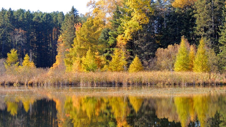 Quiet waters reflect the glow of tamaracks along the