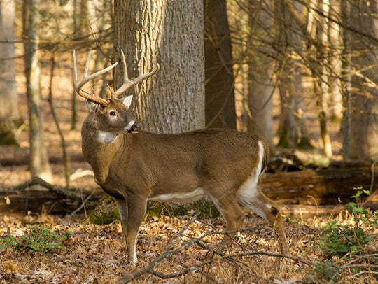 A record number of antlered bucks were harvested during