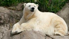Tundra, 29-year-old polar bear, dies at Detroit Zoo